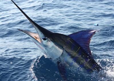 Marlin-Point-Stephans-122